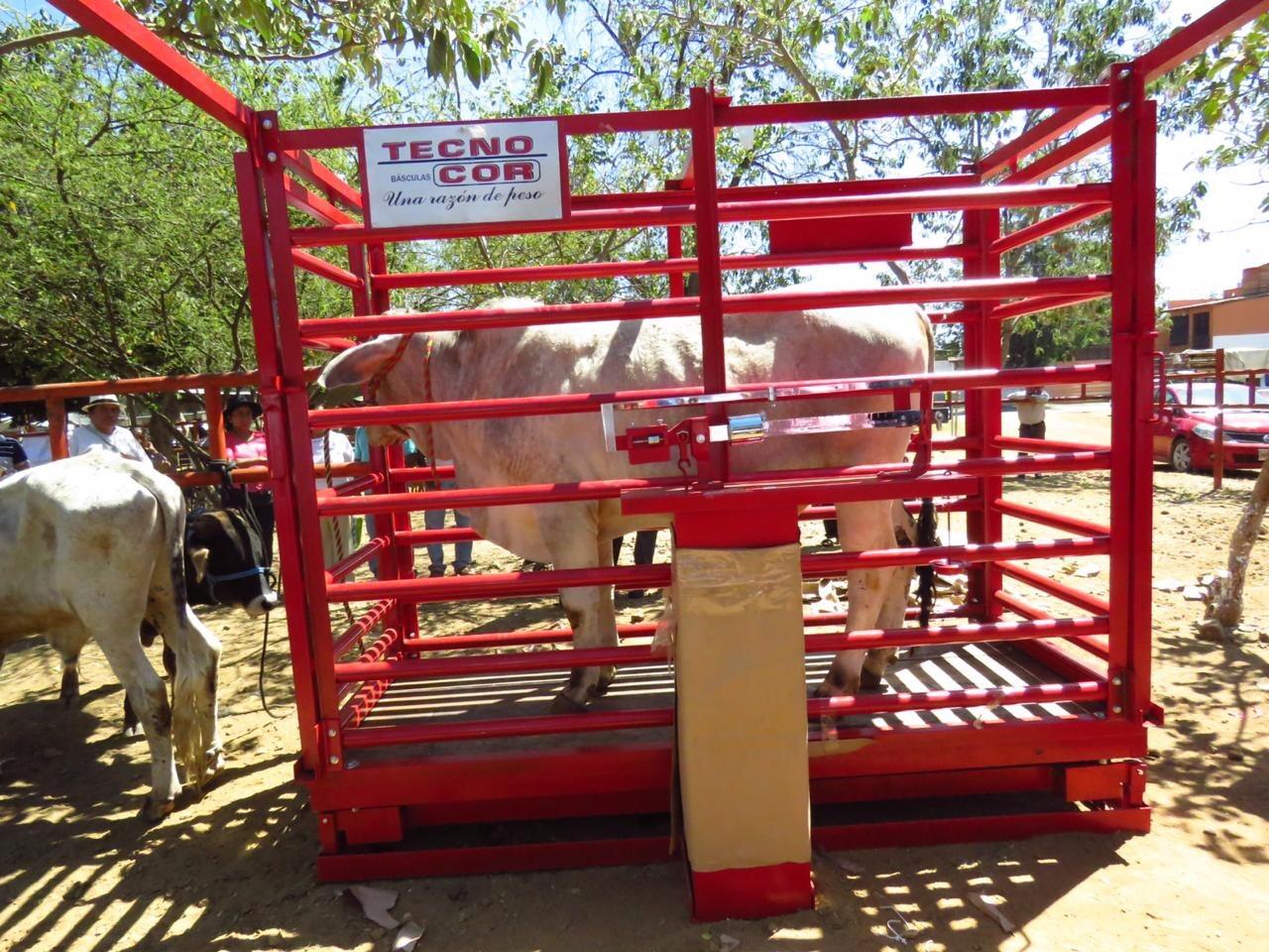 Sedapa entrega báscula de ganado mayor a baratillo de la Villa de Zaachila